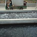 "Fillmore Fish Hatchery, and the ""Fish Food Cannon"""